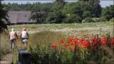 Danish Summer