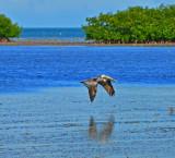 South Florida Birds - David Casler