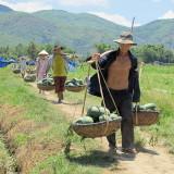 Viet_2763 Vietnam