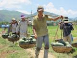 Viet_2766 Vietnam