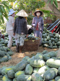Viet_2781 Vietnam