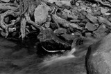 Creek Detail