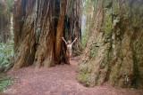 Tall Trees Celebration