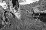 Nude at Fallen Oak