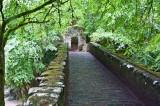 Rumbling Bridge in Hermitage Woods-DSC_06220678.jpg
