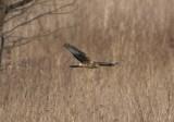 Roofvogels in de omgeving