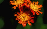 Arty Flower Burst