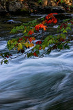 Fast Water and Red Leaves