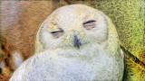 Arty Owl