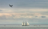 Sailboat and Orion