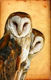 Owls on Parchment
