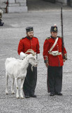 Two Soldiers and a Large Goat
