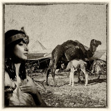 Priestess and Camels