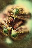 Alien Bud