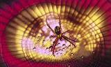 Spider on Acid