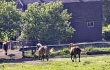Horses Arses