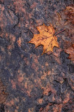 Maple Leaf and Granite