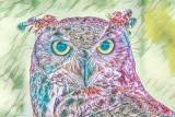 Owl on Acid