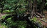 Tree and Sinkhole