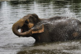 Elephant in the Lake