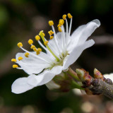 IMG_5888-Editb.jpg Tree blossom - La Madeleine Penmarc'h France - © A Santillo 2014