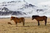 IMG_5652-Edit.jpg Lýsuhólsvegur off Snæfellsnesvegur (54) - Snæfellsbær West Iceland - © A Santillo 2014