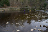 IMG_3781.jpg Stepping stones across the River Wharfe - Bolton Abbey - © A Santillo 2012