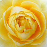 G10_0417A.jpg - Bodnant Garden, Eglwysbach, Conwy, Wales - © A Santillo 2009