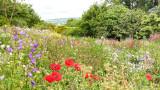 IMG_7468-Pano-Edit.jpg Wild flower meadow - The Garden House - © A Santillo 2017