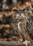 owl03.jpg
