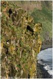Grimsey Island Landscapes