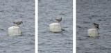 Unidentified Birds