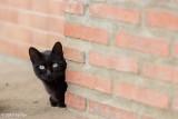 The cats of Santa Ana 2017-10-21