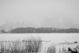 Snowfall in Tommy Thompson Park I
