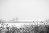 Snowfall in Tommy Thompson Park II