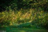 Sunlight In the Grass