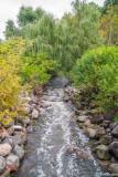 Wilket Creek After Rain