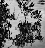 Reflections - The River Lee