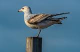 bird on post