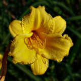 yellow, textures