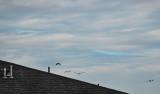 shingles, birds, sky