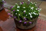 flowerpot in the rain