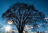 tree in winter at sundown