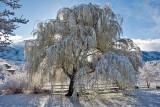 3417 April Snow.jpg