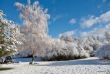 3418 April Snow.jpg