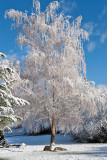 3419 April Snow.jpg