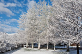 3420 April Snow.jpg