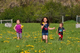 3507 kids in pasture with flowers.jpg