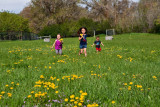 3510 kids in pasture with flowers.jpg