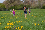 3511 kids in pasture with flowers.jpg